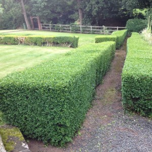 Hedge cutting services to local Councils and authorities, housing associations in the public and private sectors through out Shropshire, Mid and North Wales and South Cheshire