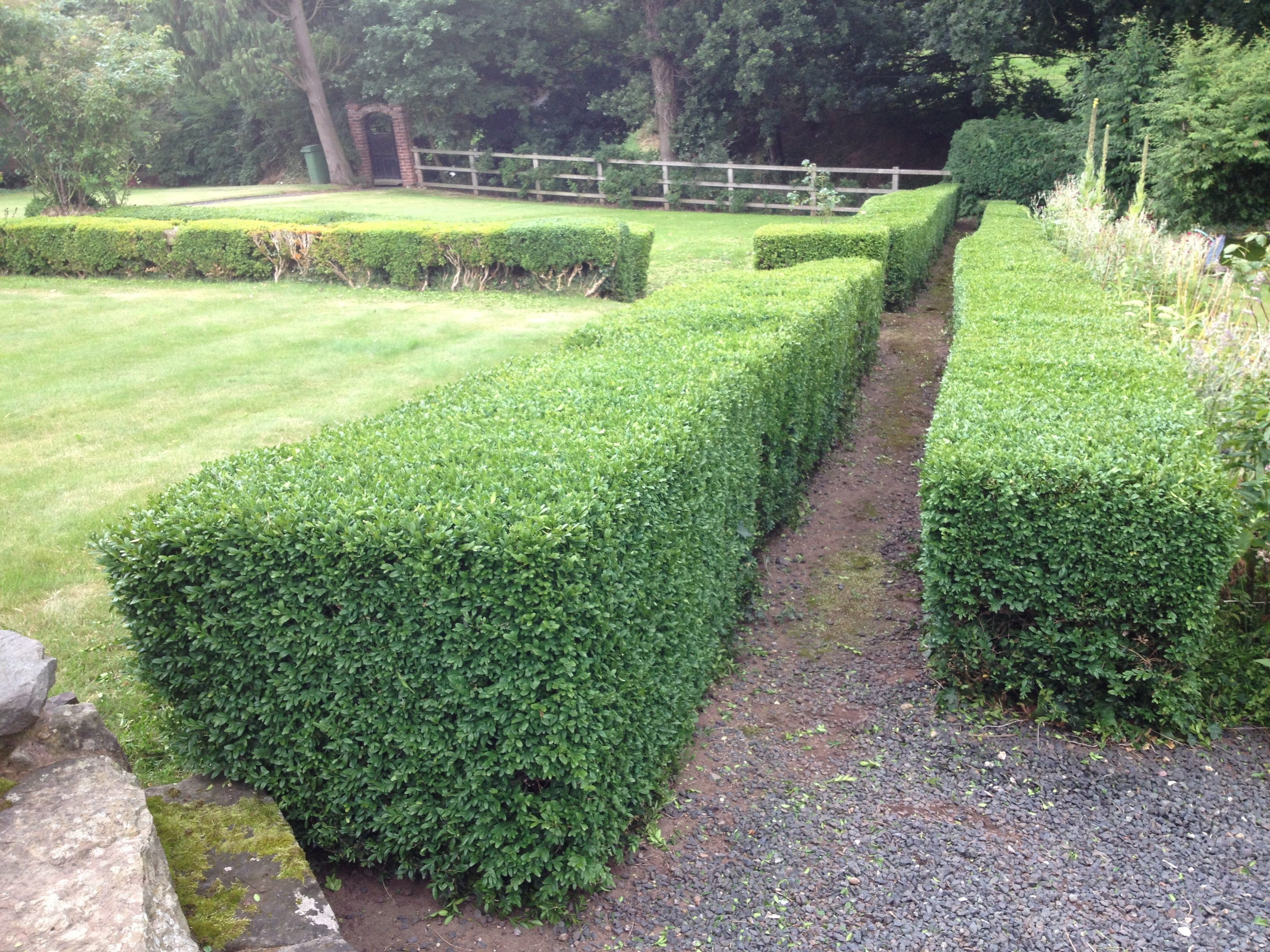 hedge cutting shropshire mid wales powys north wales. Black Bedroom Furniture Sets. Home Design Ideas