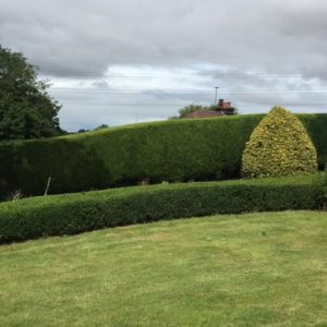 Trimmed hedges and lawns cut