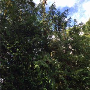 Tree surgery / arboriculture